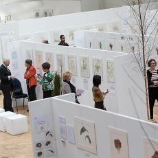 RHS London Botanical Art Show