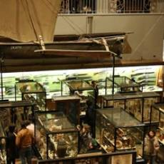 Discover: The Pitt Rivers Museum, Oxford