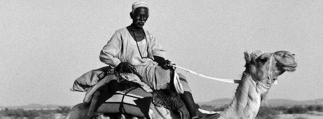 'Camel: A Journey Through Fragile Landscapes' at the Pitt Rivers Museum