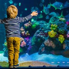 Top 5 Family Activities in Brighton