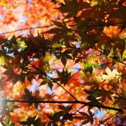 Top 5: Places to Enjoy Autumn in London