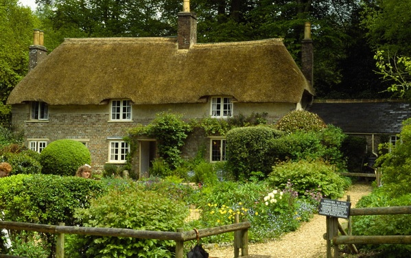 Hardy's Cottage in full bloom.