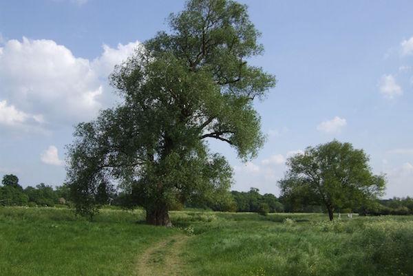 Granchester Meadows