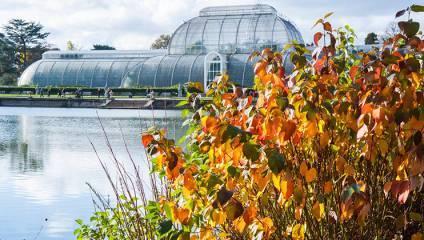 Kew Gardens Green House Autumn