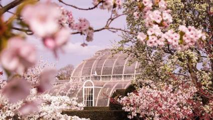 A springtime photograph of a Kew Gardens greenhouse surrounded with blossom trees